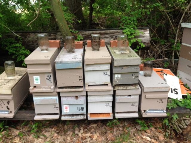 9 deep nucs from splits and QCs 9may14